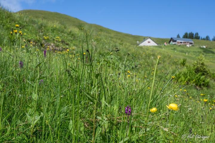 Alpwandern Ebnit – Hohe Kugel – Ebnit